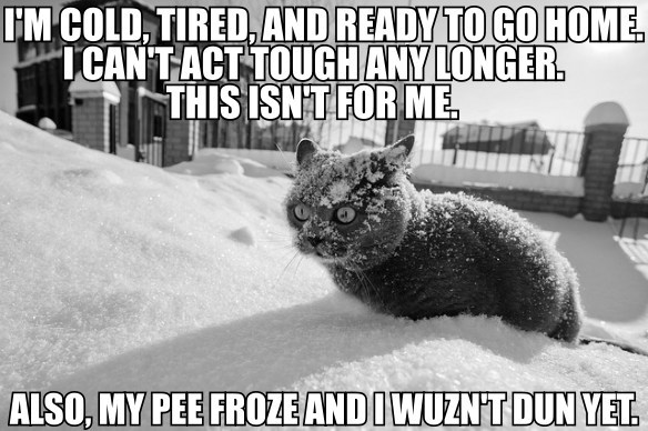 latest?cb=20160331203220 image 6 david fry quote cat meme mashup im cold etc also my pee