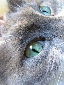 450px-Cat's Eyes
