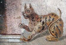 800px-Cat mosaic