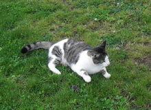 Kot po polowaniu (Aw58)