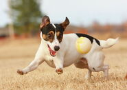 800px-JRT with Ball