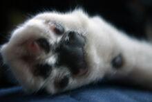 Declawedcat