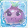 Onion grumpy under ice