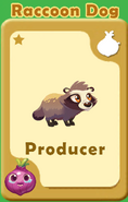 Producer Raccoon Dog A