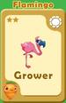 Grower Flamingo A