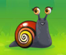 Painted Snail