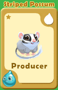 Producer Striped Possum A