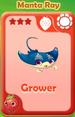 Grower Manta Ray