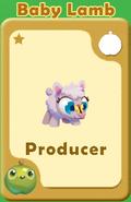 Producer Baby Lamb A