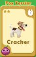 Cracker Fox Terrier A