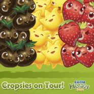 Cropsies on Tour Belgium