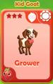 Grower Kid Goat