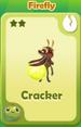 Cracker Firefly