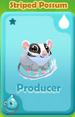 Producer Striped Possum