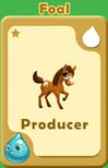 Producer Foal A