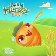 Carrot On a field