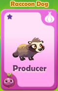 Producer Raccoon Dog