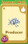 Producer Leopard Moth A