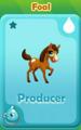 Producer Foal