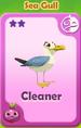 Cleaner Sea Gull