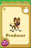 Producer Cape Hunting Dog A