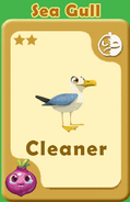 Cleaner Sea Gull A