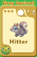 Hitter Grey Squirrel A