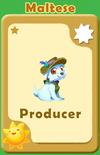 Producer Maltese A