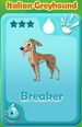 Breaker Italian Greyhound