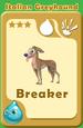 Breaker Italian Greyhound A