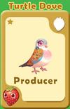 Producer Turtle Dove A
