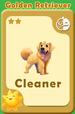 Cleaner Golden Retriever A