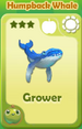 Grower Humpback Whale