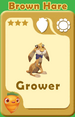 Grower Brown Hare A