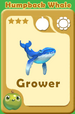 Grower Humpback Whale A