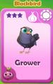 Grower Blackbird