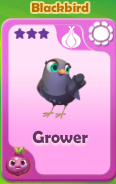 Grower Blackbird