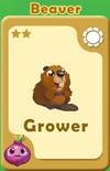 Grower Beaver A