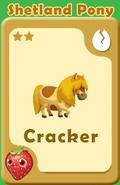 Cracker Shetland Pony A