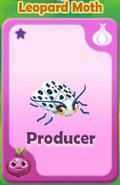 Producer Leopard Moth