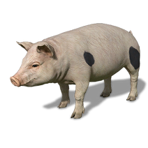 FS19 Animal-PigWhite