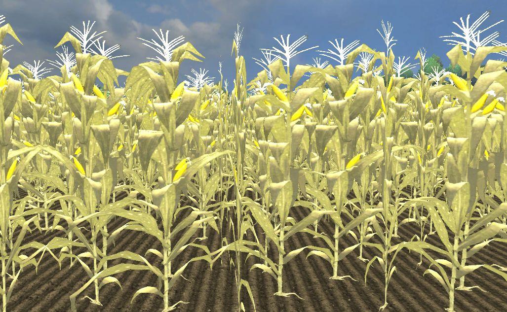 Corn (Farming Simulator 2013) | Farming Simulator Wiki | FANDOM
