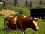Cows (Farming Simulator 2013)