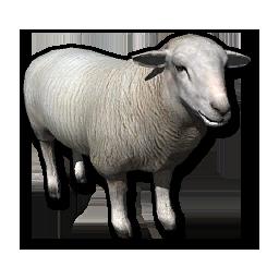 Store sheep