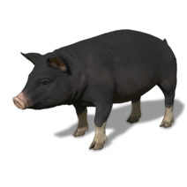 FS19 Animal-PigBlack