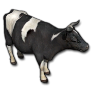 Store cow