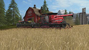 FS 17 Wheat