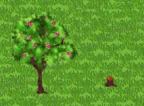 Cinnamon Tree Growth