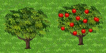 Apple Tree Growth