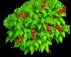 Coffe bush 1